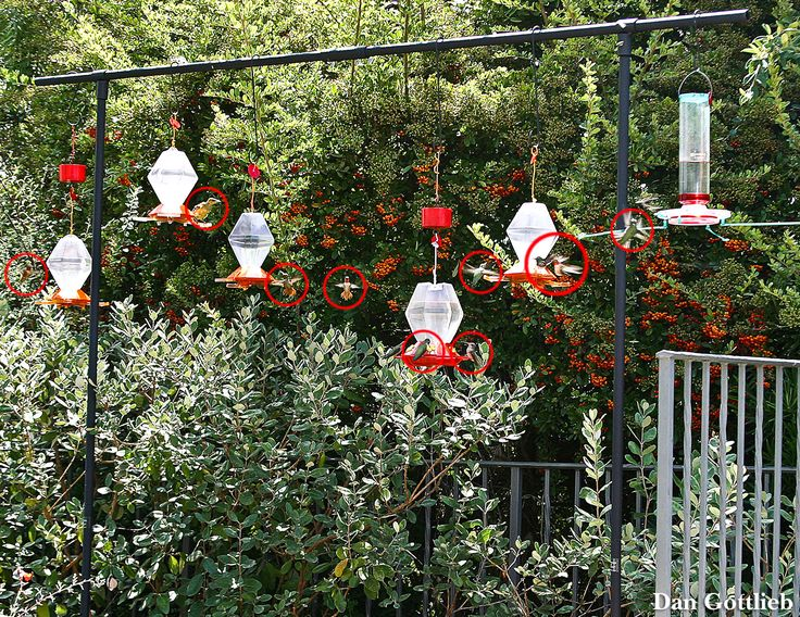 Exceptional Hummingbird Garden   Google Search