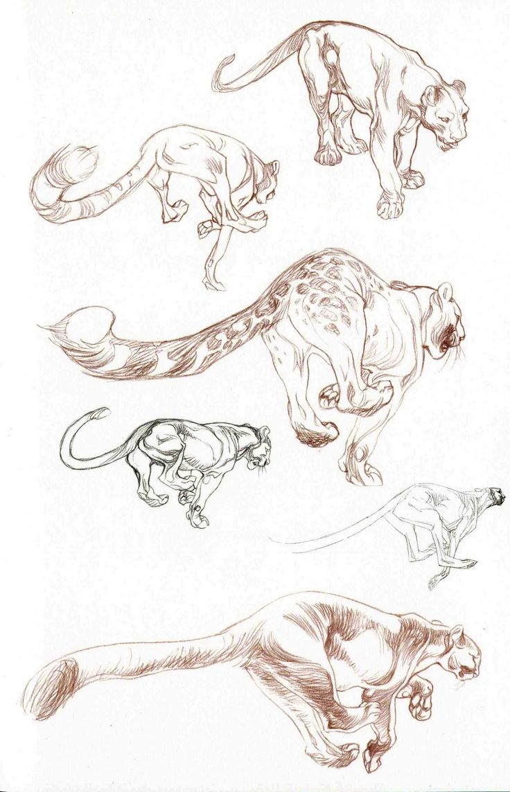 Claire Wendling Find more at www.facebook.com/... if you are looking for: #art #character #design #model #sheet #illustration #best #concept #animation #drawing #archive #library #reference #anatomy #traditional #draw #development #artist #how #to #tutorial
