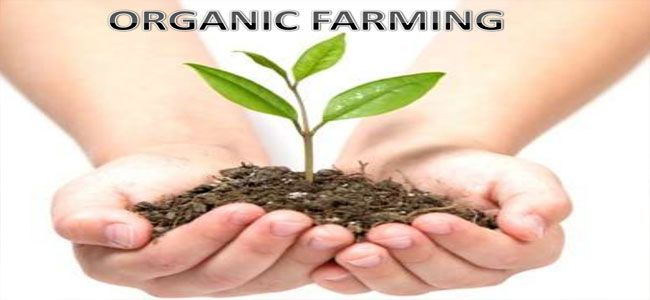 I choose organic farming in order to give the crops valuable nutrients but without the use of pesticides.