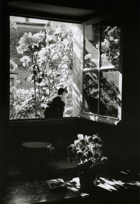 Édouard Boubat, Stanislas at the window. France, 1973.