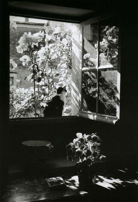 Édouard Boubat    Stanislas at the window    France, 1973: 1973, Art, Black White, Windows, France, Édouard Boubat, Edouard Boubat, Photography, White Cat