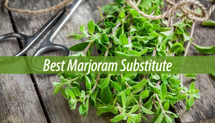 Do you need marjoram for your recipe but don't have it in your spice rack? If you need a substitute for marjoram, then here are some options you can try: