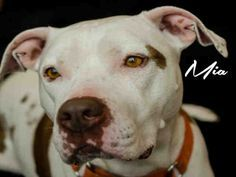 MIA (very sweet)PITTSBURGH, PA... PetHarbor.com: Animal Shelter adopt a pet; dogs, cats, puppies, kittens! Humane Society, SPCA. Lost & Found.