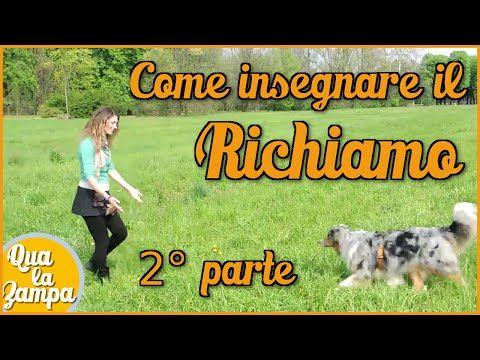Come insegnare il RICHIAMO, 2° parte | Qua la Zampa - LaCumpa.it