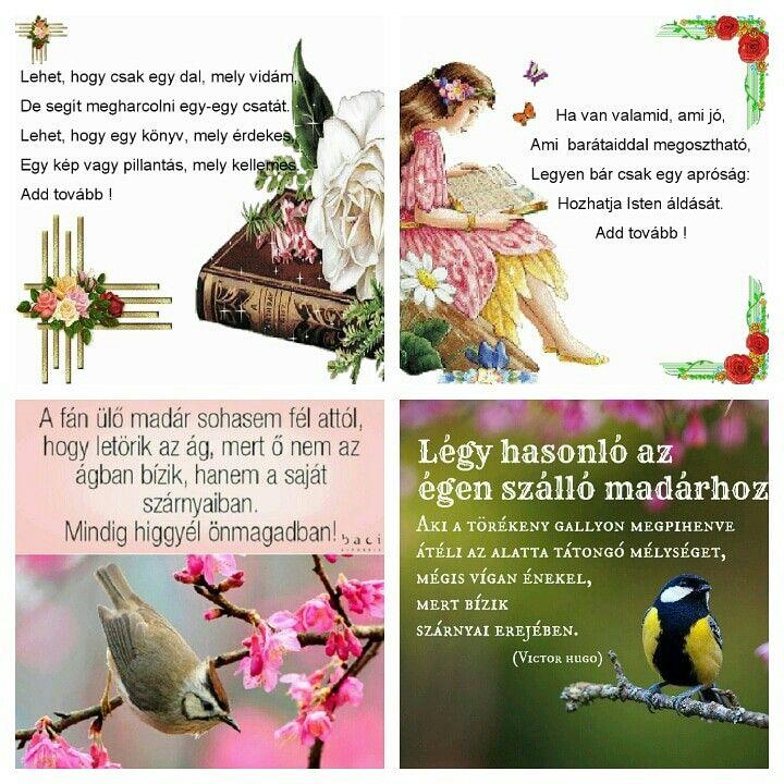 megosztható idézetek képekkel Pin by Edit Kérdő on idézet   Képek, Motiváció, Madarak