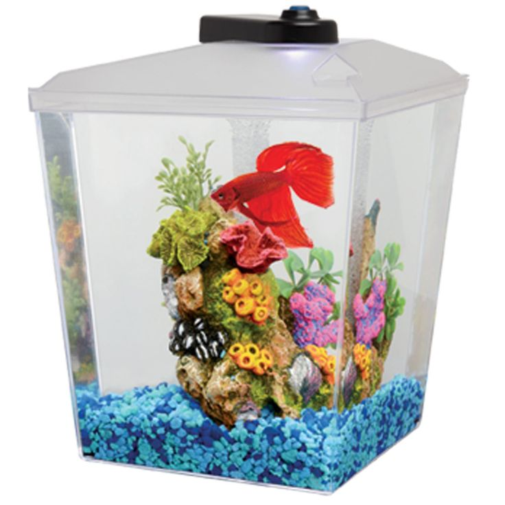 Petco 1 Gallon Corner Aquarium Kit - 1 Gallon. Includes a tank, lighted hood and undergravel filter. The perfect starter kit for anyone looking to add a fish to their home or office. - http://www.petco.com/shop/en/petcostore/petco-1-gallon-corner-aquarium-kit