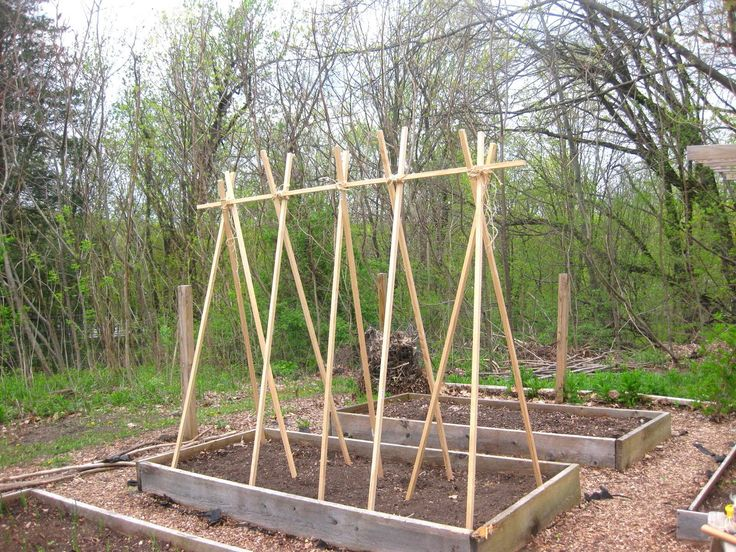Bean Trellis Ideas Part - 50: My Joan Crawford-Approved Tomato Trellis