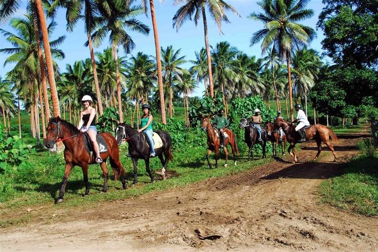 A horse's eye view of the South Pacific. (Santo Horse Trek Safari - Santo, Vanuatu) #Horseback #Vanuatu