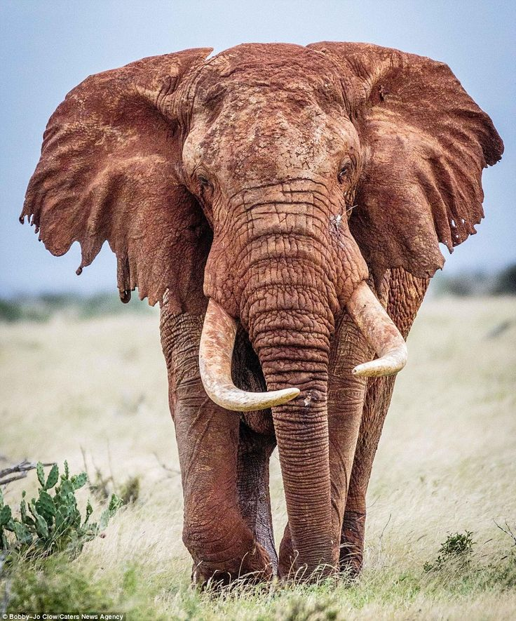 Bobby-Jo Clow Photography... The photographer has made regular pilgrimages to southern and eastern Africa to capture the stunning creatures on camera in their natural habitat