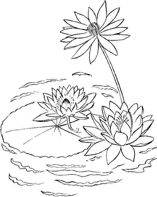 find this pin and more on disney water lilies coloring page