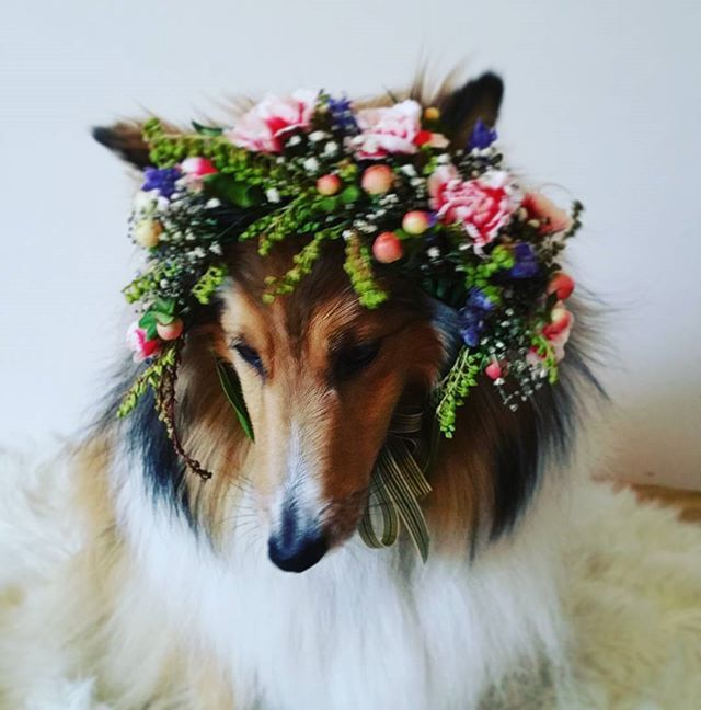 Flower crown... modeled by Dixie