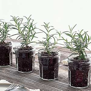 Plant herbs in glass jars for a natural - and useful! - decoration for your home or for a party
