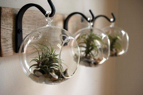 Crochet - plante - bois