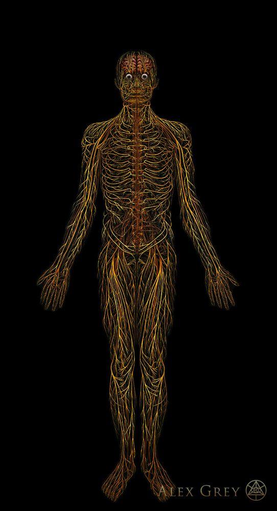 Alex gray anatomy