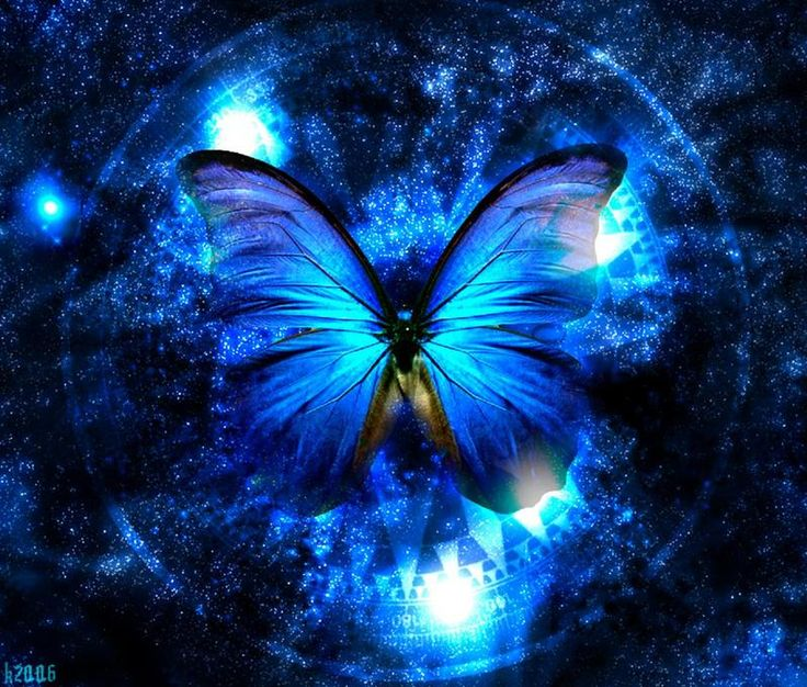 butterfly+pictures | The Little Princess: The blue butterfly