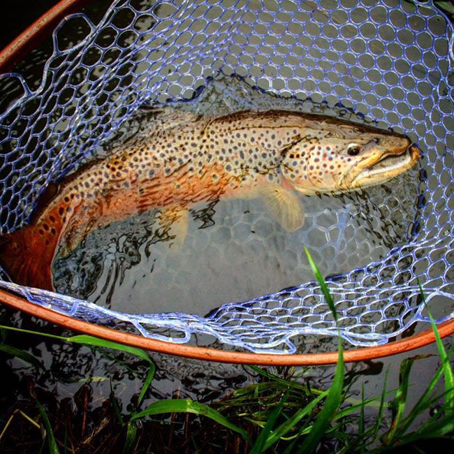 Pro Tips: 3 Keys to Finding Bigger Trout   Orvis News