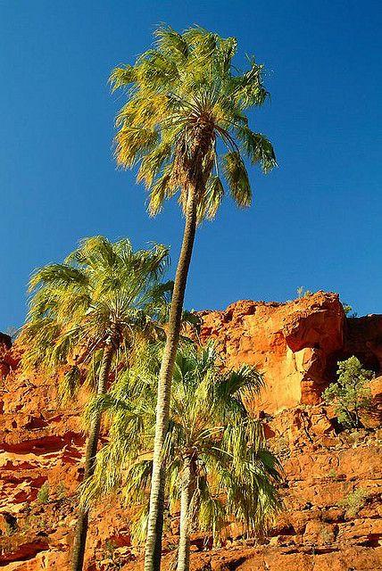 Palm Valley - Australia