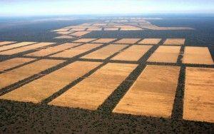 ECO-DIARIO-ALTERNATIVO: 73.968 hectáreas de bosques arrasadas en Paraguay