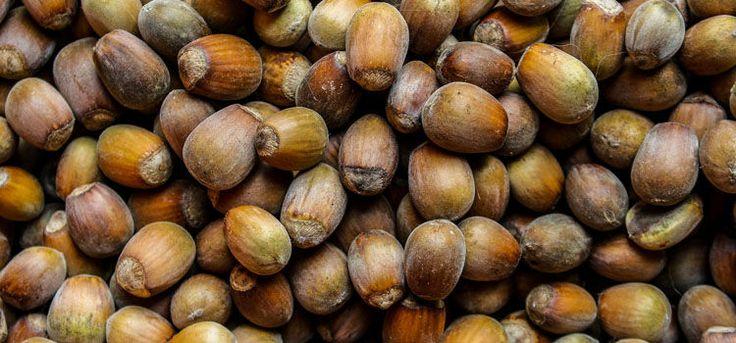 Homegrown hazelnuts
