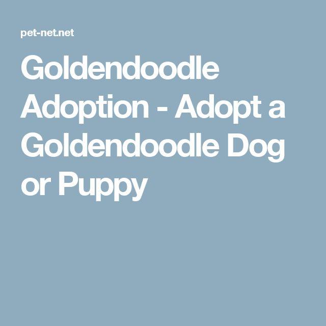 Goldendoodle Adoption - Adopt a Goldendoodle Dog or Puppy