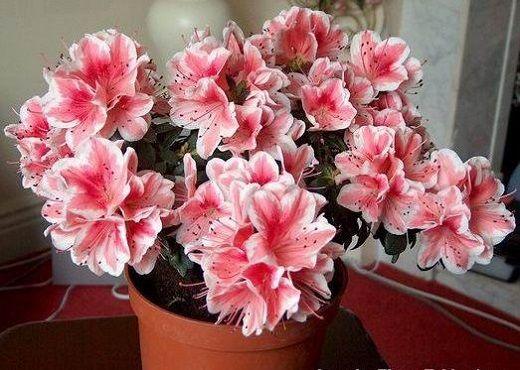 Любимые цветы в доме. О чем они «молчат» — Всегда в форме!