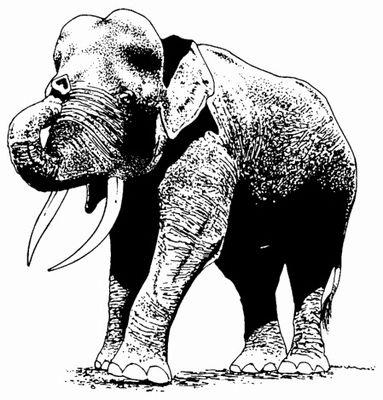 Aziatische olifant rechts  5 x 5?