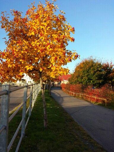 In Hudiksvall Sweden