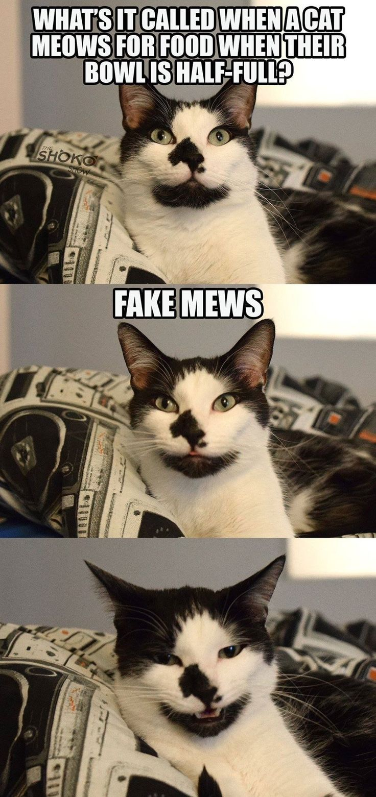 What's it called when a cat meows for food when their bowl is half full?  Fake Mews