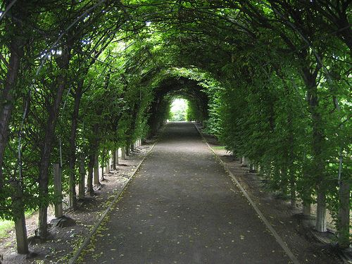 Took some of my favorite wedding pics in this spot. - Staten Island - Sailors' Snug Harbor: Staten Island Botanic Gardens - Allee by wallyg, via Flickr