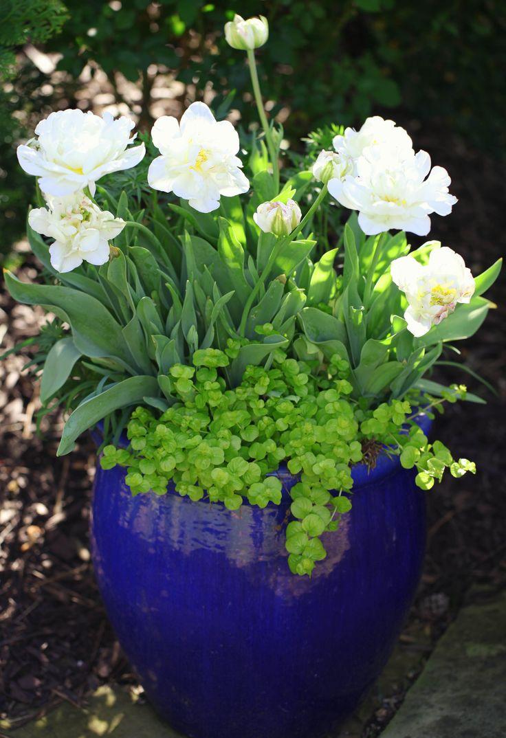 Garden Pots 92 Best Glazed Garden Pots Images On Pinterest