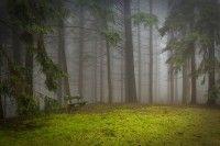 Metsäretki - erilaisia tutkimustehtäviä.