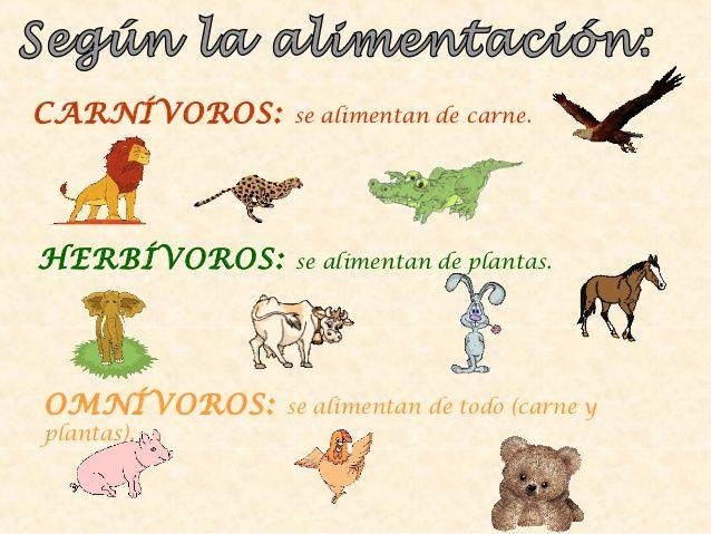 Clasificacion De Los Animales Segun El Tipo De Alimentacion Clasificacion De Animales Clasificacion De Seres Vivos Actividad De Clasificacion De Animales
