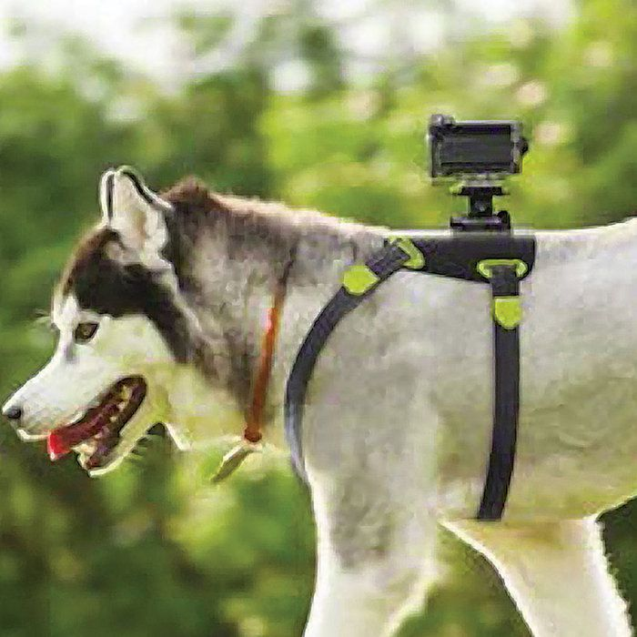 Sony Action Cam with Wi-Fi K9 Bundle Ever wonder what it feels like to catch a Frisbee in your mouth? Strap the Sony Action Cam onto your dog's back and experience life through canine eyes.