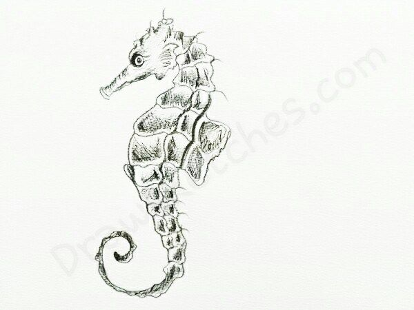 How to Draw A SeaHorse: In a Few easy steps with pictures