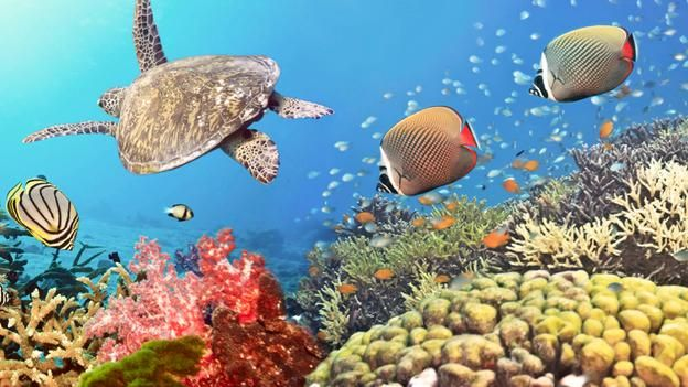 BBC - Future - Science & Environment - Will we ever… lose all of our coral reefs? - Article.
