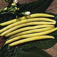 Image of Gold Rush Bean