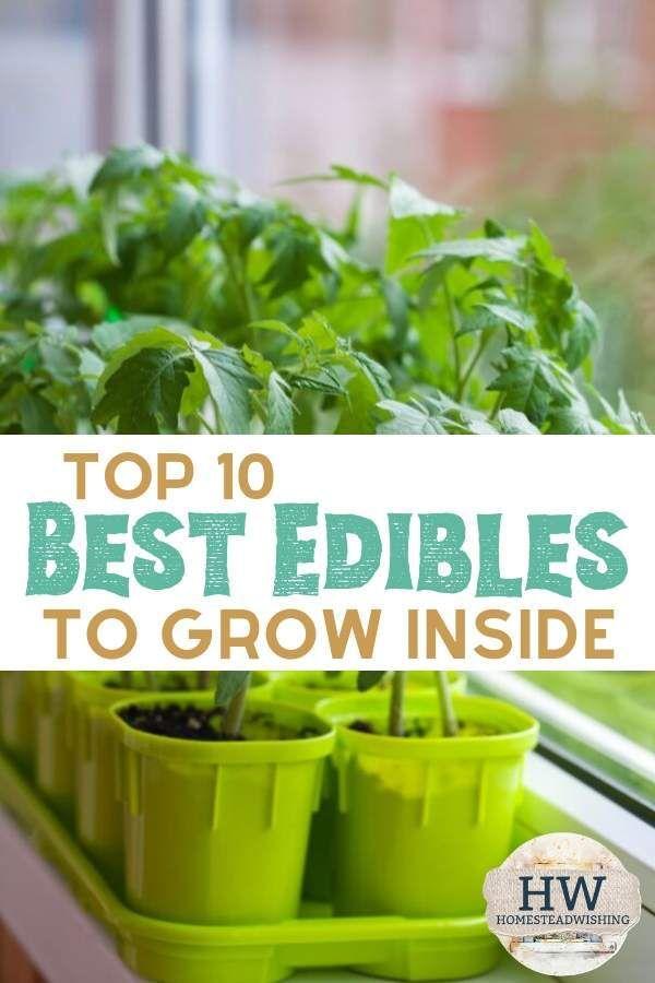 Top 10 Best Edibles To Grow Inside Growing Food Indoors