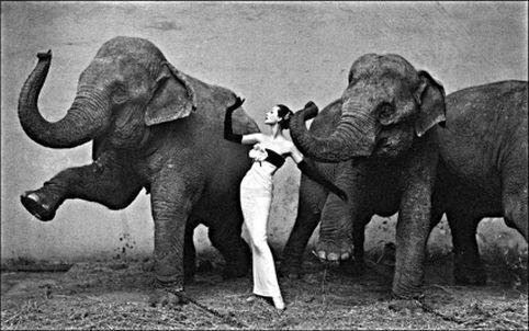 Scrieri blitz: Doi elefanţi se legănau - Scrieri blitz