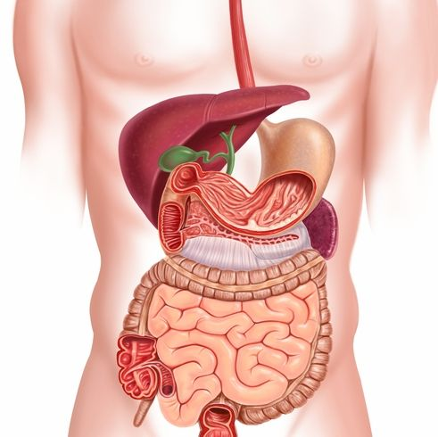 Image result for Healthy stomach