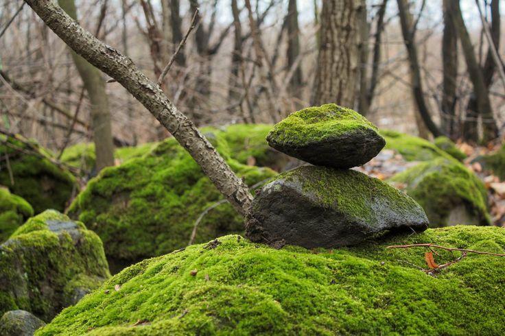 Картинки по запросу мох на камне