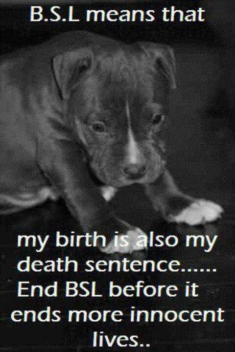End BSL(breed specific legislation)