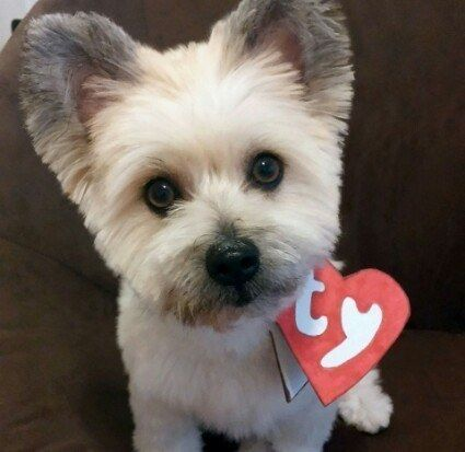 AN ACTUAL LIVING BREATHING BEANIE BABY. | 27 Dog Halloween Costumes You'll Want To Steal For Yourself