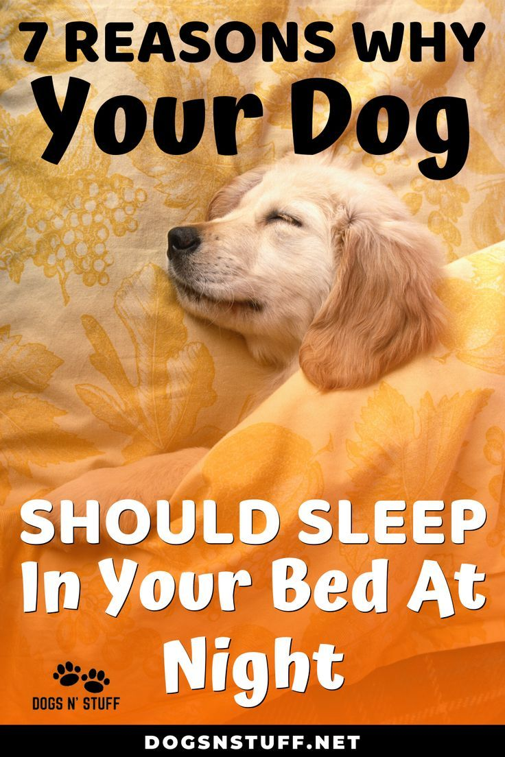 7 Amazing Reasons Why Your Dog Should Sleep In Your Bed At Night Sleeping Puppies Sleeping Dogs Dogs