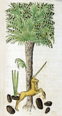 A German Botanical Renaissance - NLM holds a varied collection of herbals, including some by pioneering German Botanists in the 1500s. Image: Palm tree with unicorn from Hieronymus Bock's Kreüter Bůch, Strasbourg, 1546