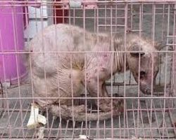 Stop Civet Coffee Bean Farming! - The Petition Site. This highly expensive coffee is made using their poop. Suffering in small cages to help create this expensive coffee. Please help them by signing. I love coffee but will never drink this brand because of the suffering they cause these creatures. I thank you!!!