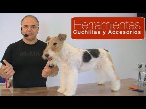 PELUQUERÍA CANINA - TÉCNICA - HAND STRIPPING, ¿QUÉ ES?, ¿PARA QUÉ SIRVE? - YouTube
