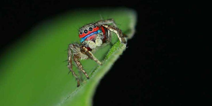 Spectacular spiders. New species.