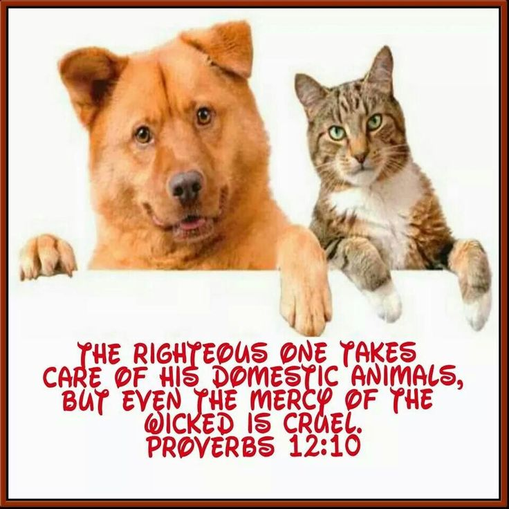 The righteous one takes care of his domestic animals, But even the mercy of the wicked is cruel. Proverbs 12:10