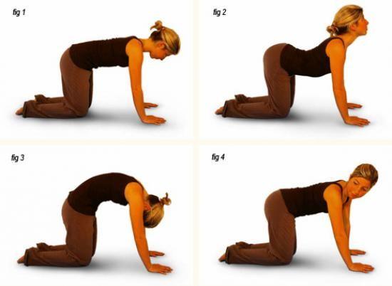 la position du chat pour éliminer le mal de dos