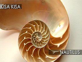 Nautilus Video